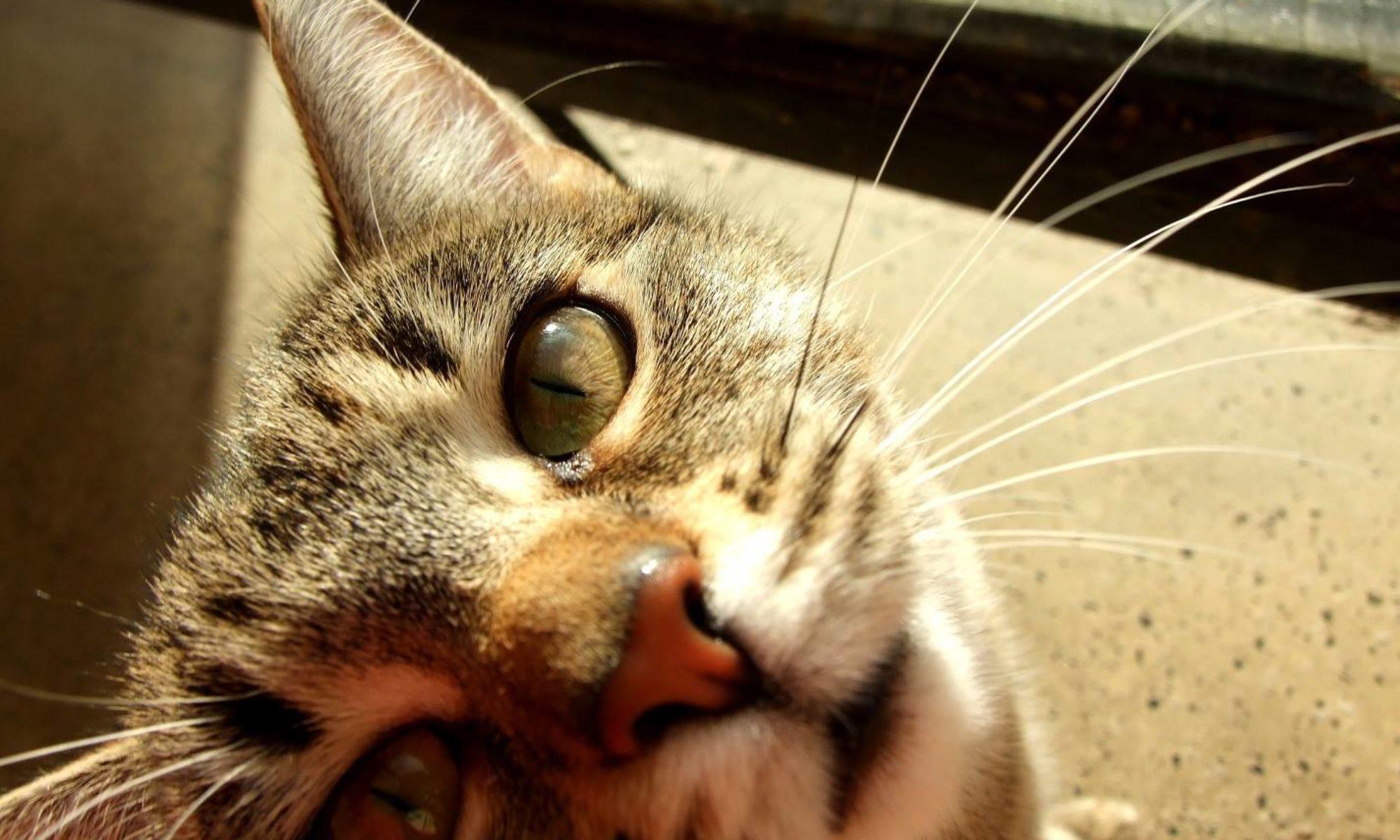 Kočičí polepšovna