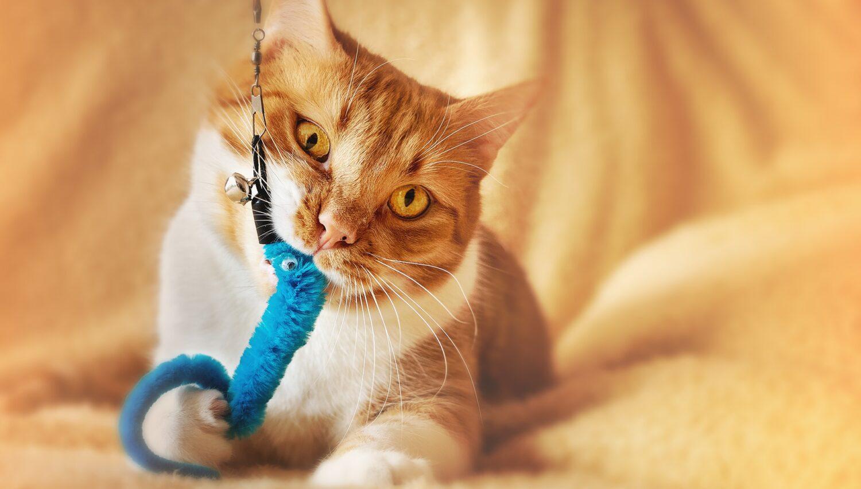 Kočičí polepšovna Kateřiny Štiblické