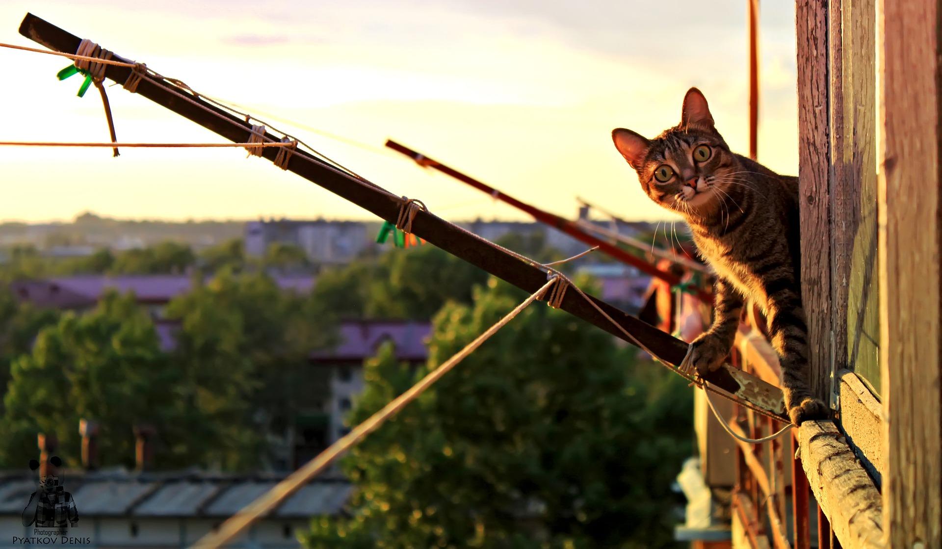 Jak ji neotrávit či nezabít – kočka v domácnosti