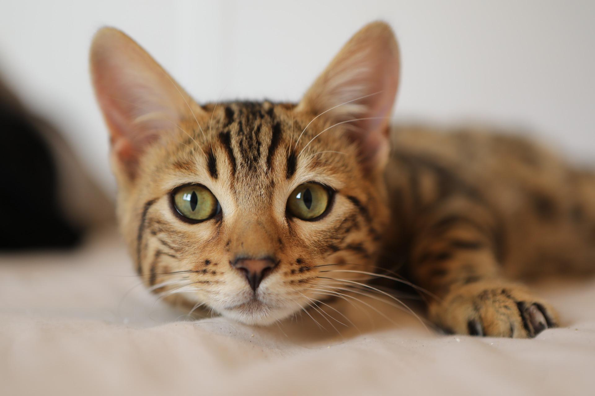 Péče o kočku pro osoby s handicapem