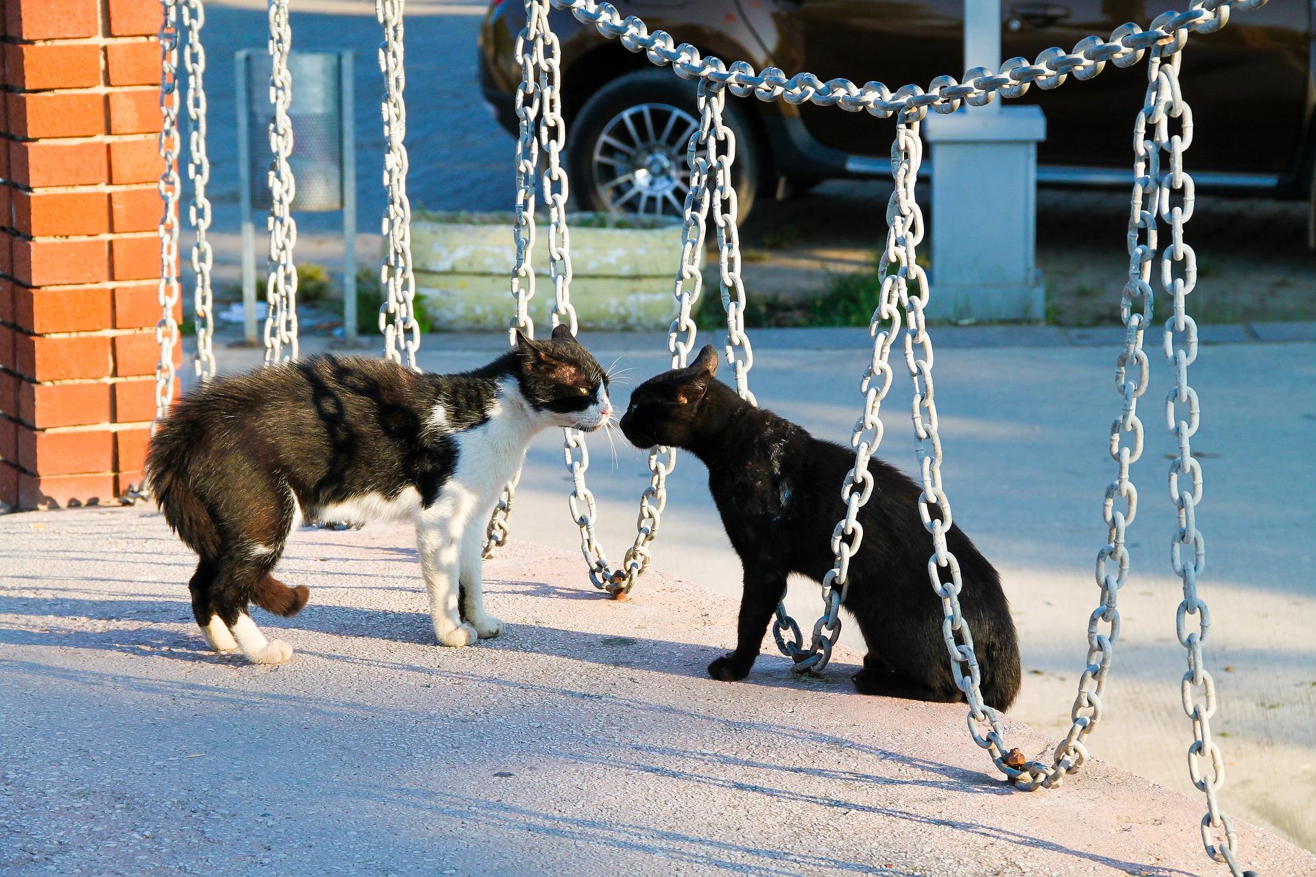 Feromony pro kočky – vyplatí se?