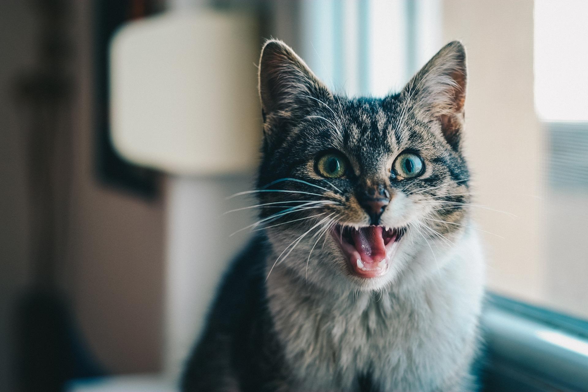 Kočky v rauši – dopřejte jim tyto rostliny