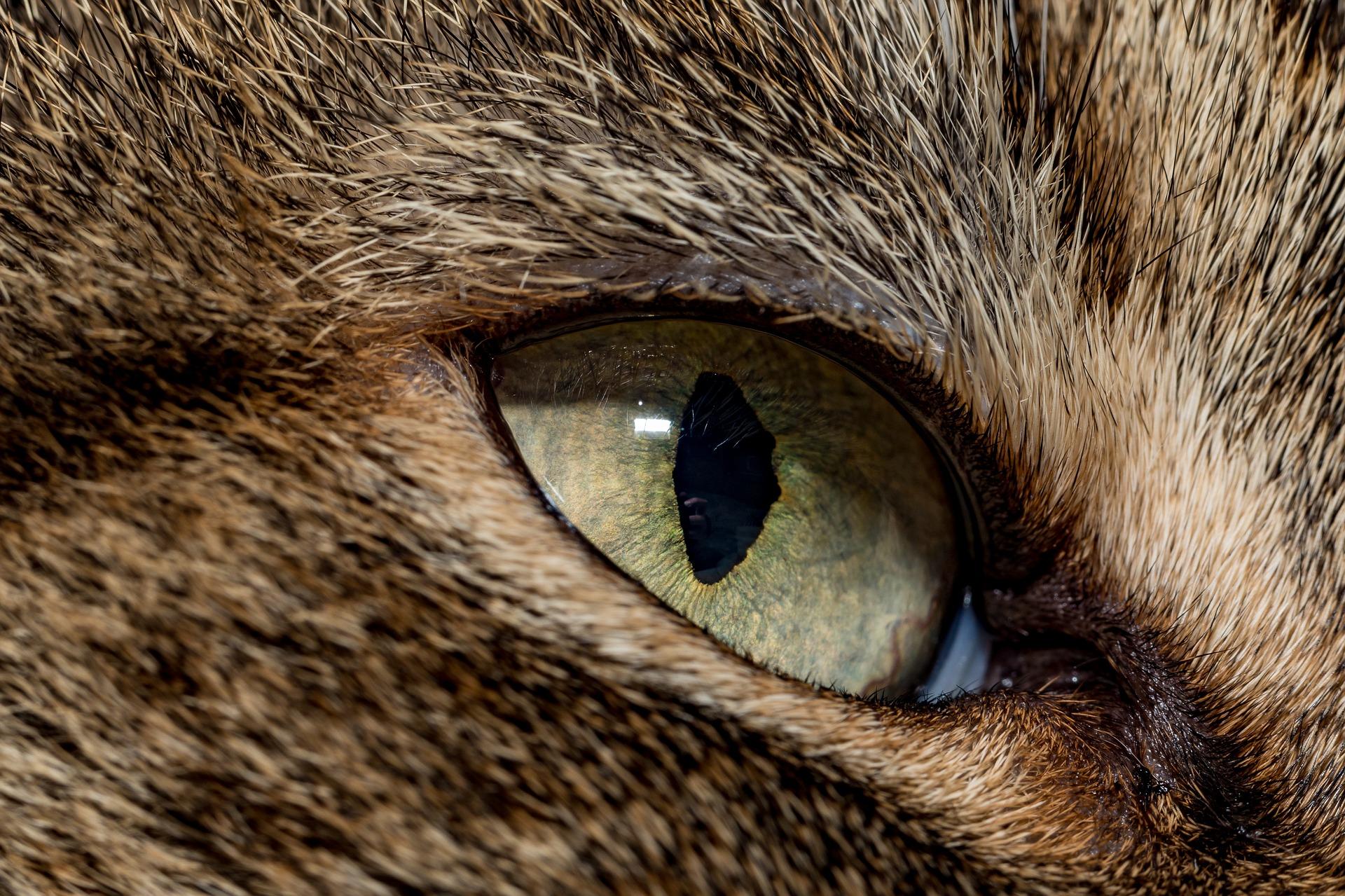 Viditelná mžurka u koček – pozor, problém!