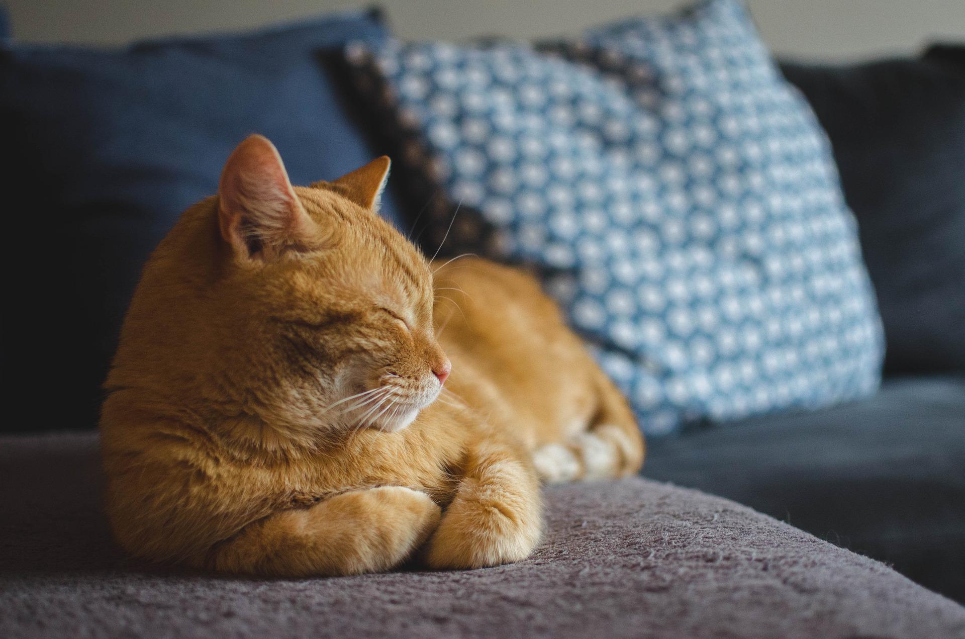 Záhadné idiopatické záněty močového měchýře koček nejde řešit. Nebo ano? Roli hraje i stres
