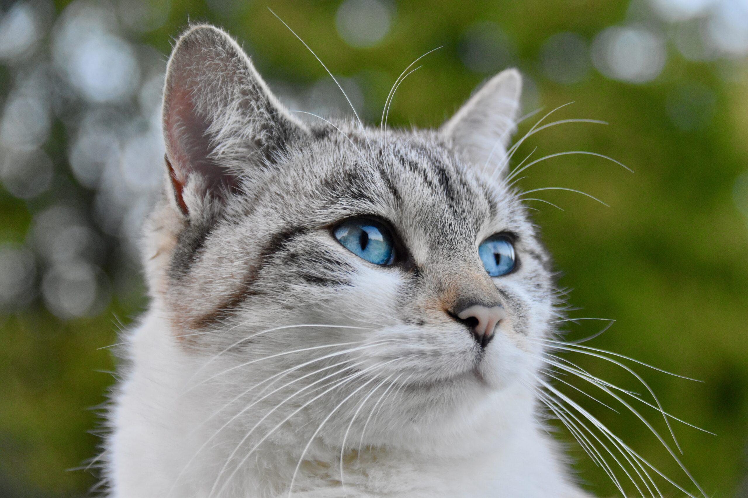 Problémové chování koček – je lepší převýchova, léky či alternativa? Užitečný rozcestník