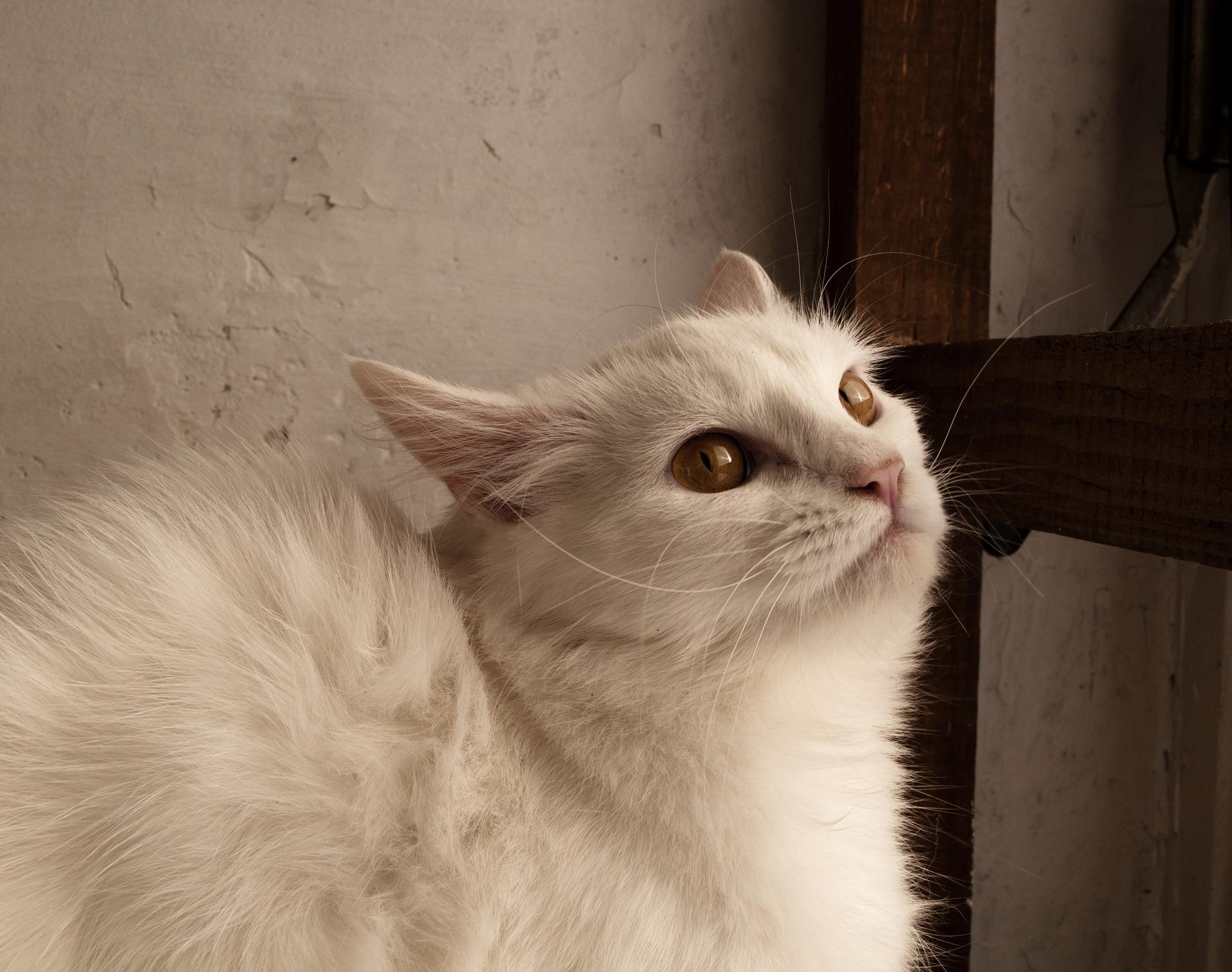 Proč značkují i vykastrované kočky?