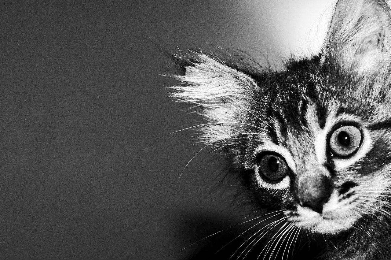 Jak nás vidí koťata?