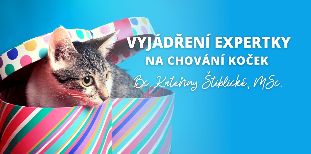 Kočka není dárek, je to závazek