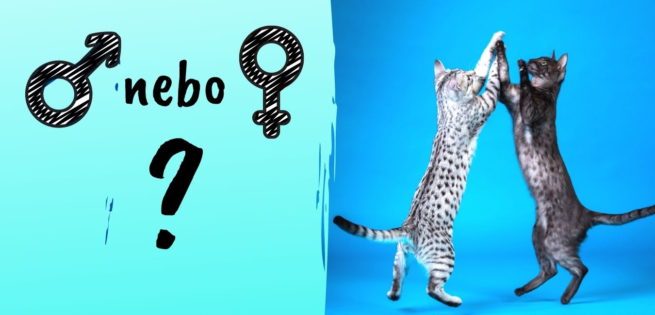 Výbíráme kočku: Záleží na pohlaví?