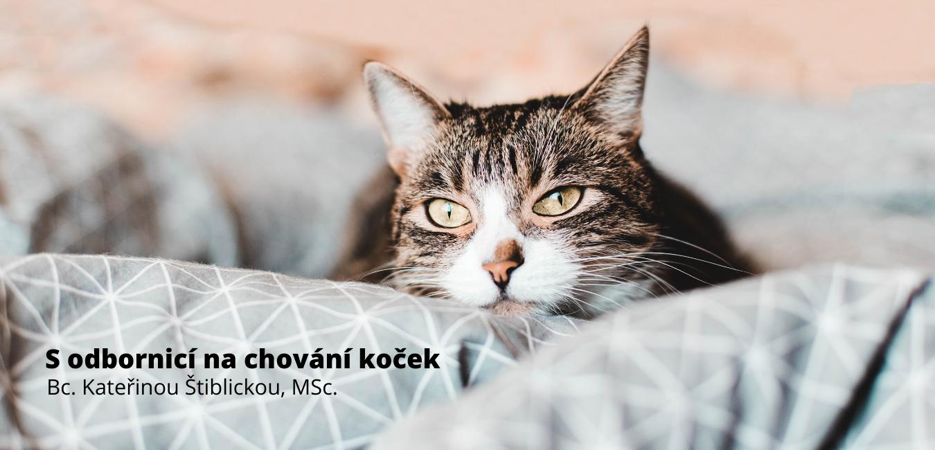 Proč Vám kočka čůrá na postel?